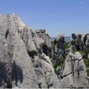 stone-forest-6