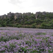the-see-of-flower-in-naigu-stone-forest-4